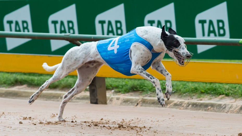 """Featured image for """"Star Youngster Makes Stunning Racing Return"""""""